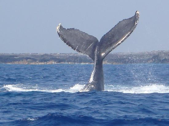 FTV 239 Tales of Whales